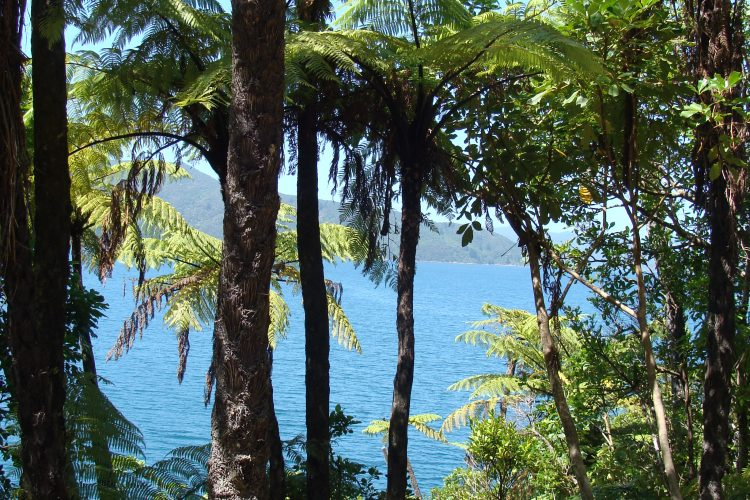 Water views at Ship Cove on Queen Charlotte Track