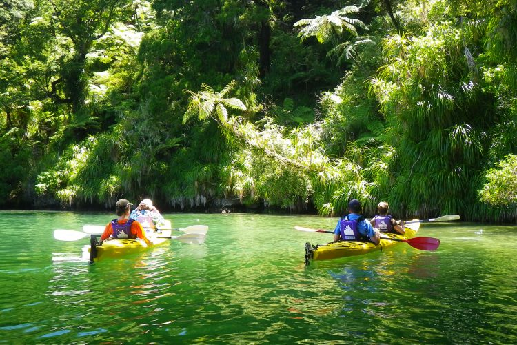 Sea Kayaking Grove Arm, Queen Charlotte Sound Marlborough Sounds NZ